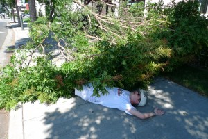 Area Man Struck By Falling Tree Branch